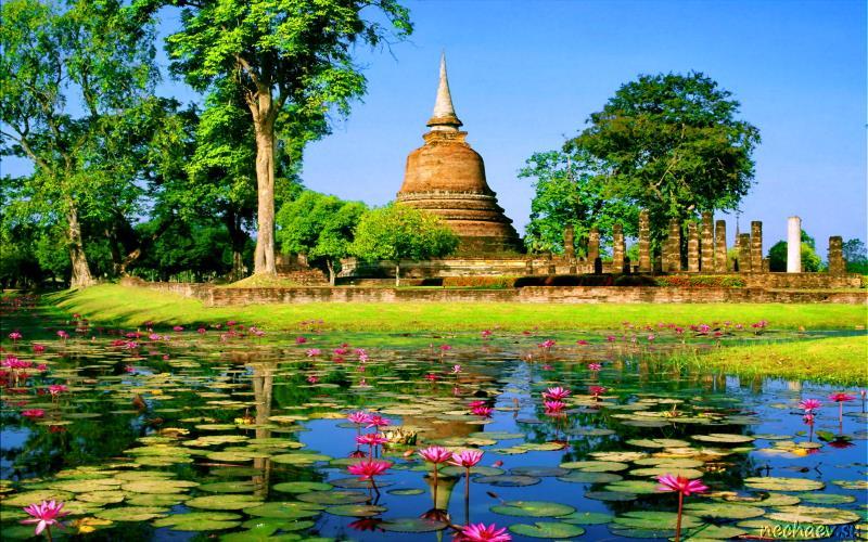 Пруд в Таиланде