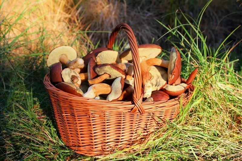 Корзина польских грибов